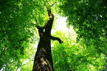 Postgraduate programes in environment