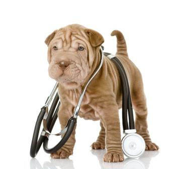 Veterinary Medicine what subject should i teach